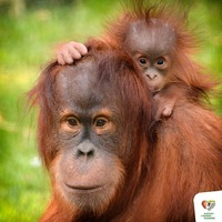 Számokban is lenyűgöző, amit a budapesti állatkert kínál