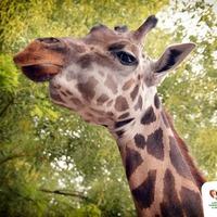 Világrekorder állatkerti lakó ünnepelte születésnapját