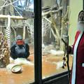 Mézeskalács, alma, dió, mogyoró – megjött a Mikulás a gorillákhoz