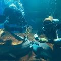 A cápák közé vetette magát két ember a budapesti állatkertben