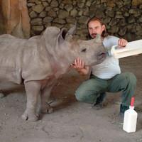 Nehézsúlyú állatkerti lakó, aki mesterséges termékenyítéssel született