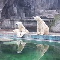 Tíz dolog, amit nem tudtál a jegesmedvékről