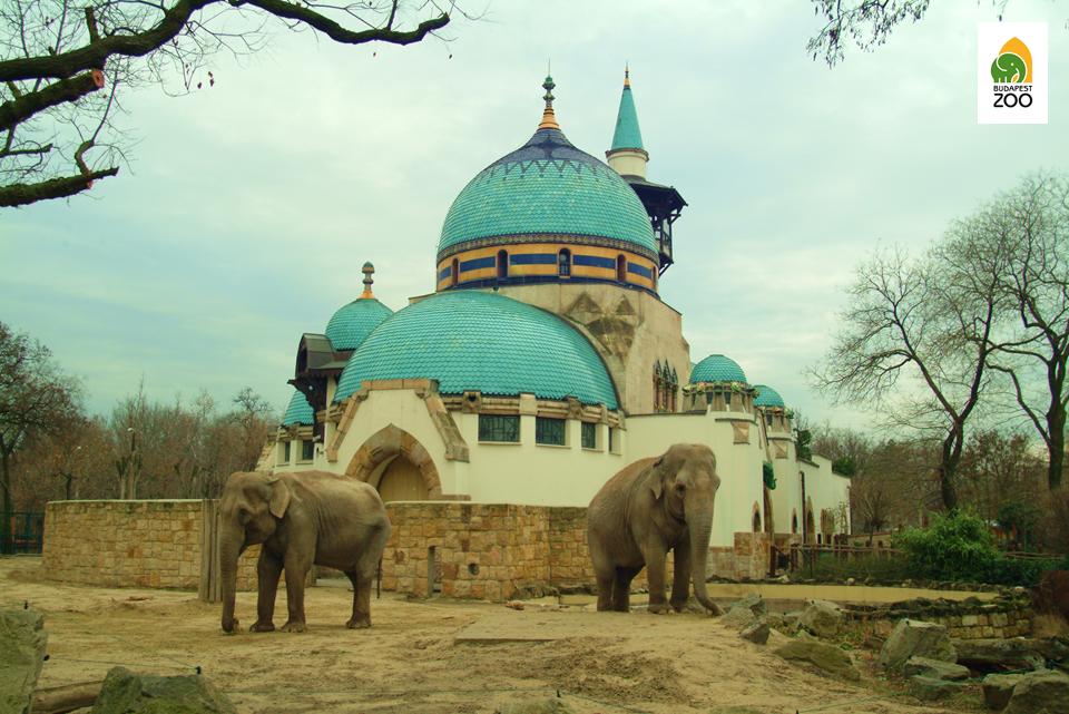 01elefanhaz-elefantokkal.png