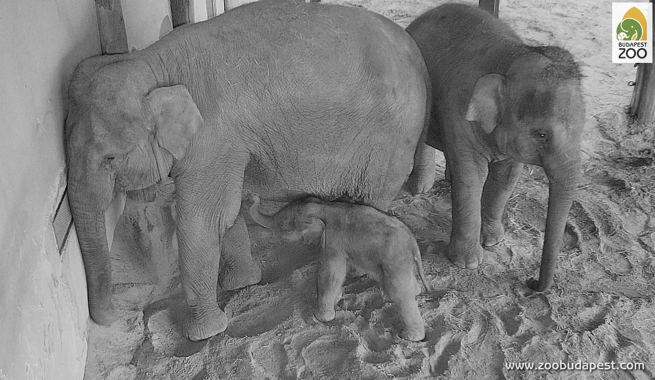 elephantbaby2.jpg