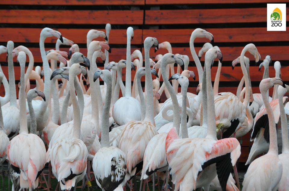 flamingo01.png
