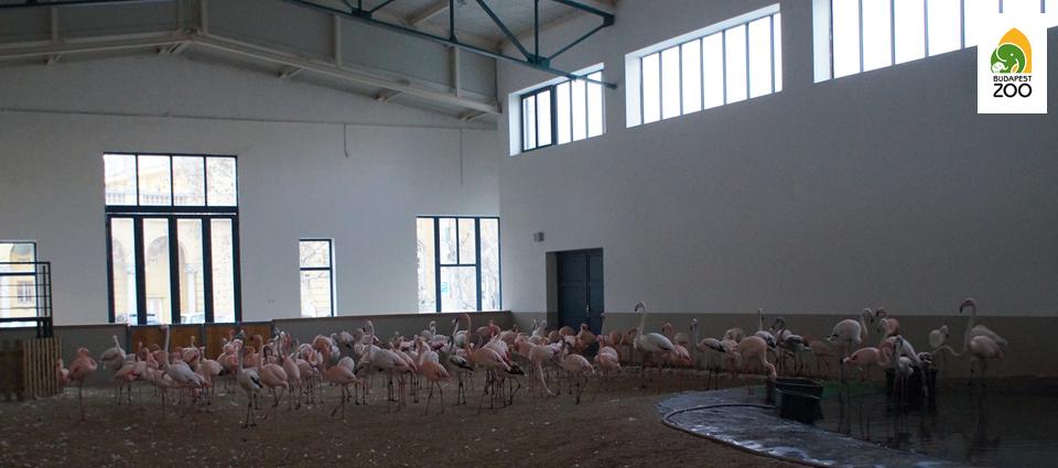 flamingo02.png