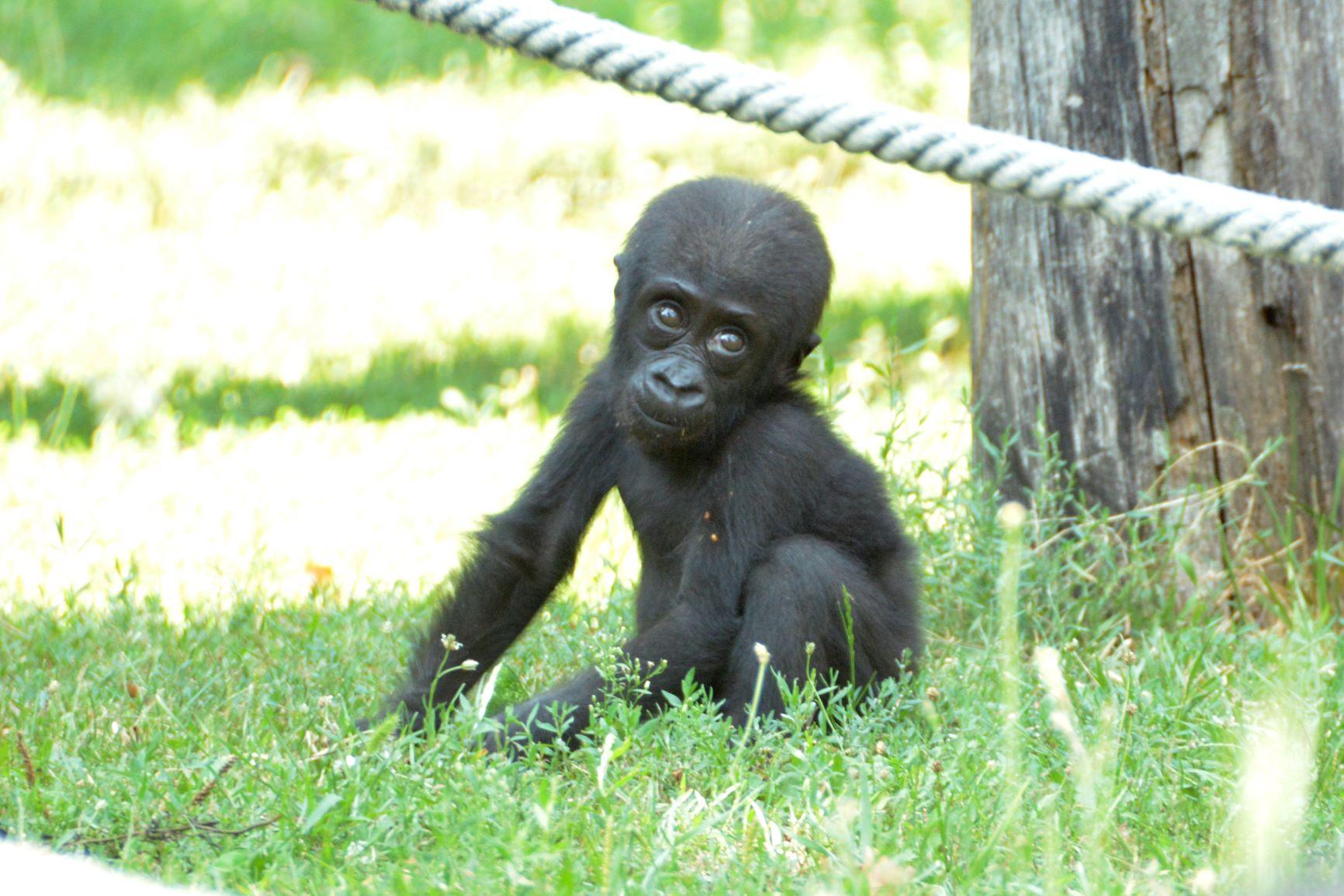 gorilla_684_indigo.jpg
