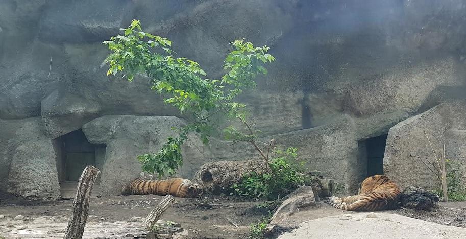 tigrisbigris_jo.jpg