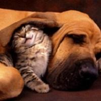 Noé-cikk: Kutya-macska barátság