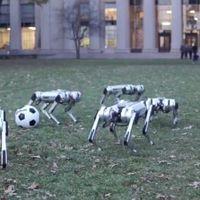 Robotkutyák a parkban