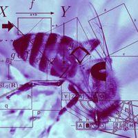 Matematikát tanulnak a méhek