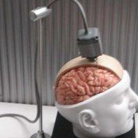 Emberi agyra kapcsolt ideghálóval jobbak lesznek a műtestrészek