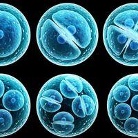 Robotok miniorganizmusokat tenyésztenek emberi őssejtekből