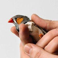 Állatlaborok segítenek az MI-kutatásban
