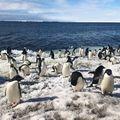 Drónraj dokumentálja az antarktiszi Adélie pingvinek életét