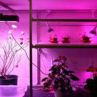 Cyborg botanika: Elowan, a robot-növény hibrid