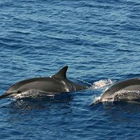 Delfinfigyelés Facebook-algoritmussal