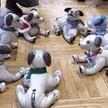 Robotkutyák partiznak egy japán kávéházban