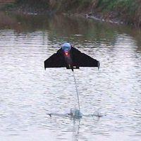 Repülő robothal
