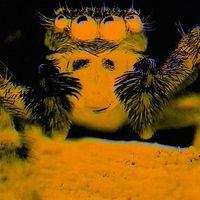 Úgy érezzük magunkat egy virtuális valóságban, mintha pókok lennénk