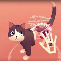Kezünkkel tapinthatjuk ki a virtuális cica szerveit