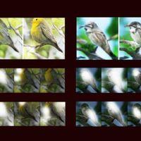 Élethű képeket generál a Microsoft mesterséges intelligenciája