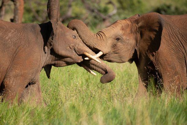 elefant0.jpg