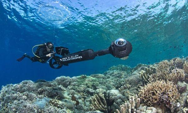 koral.jpg