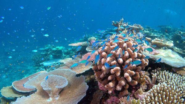 koral0.jpg
