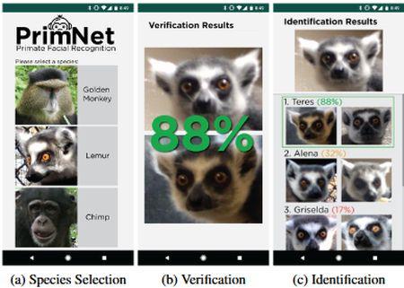 primates0.jpg
