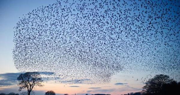 swarm_1.jpg