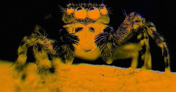 vr_spider0.jpg