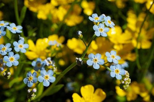 160616wildflowers05.jpg