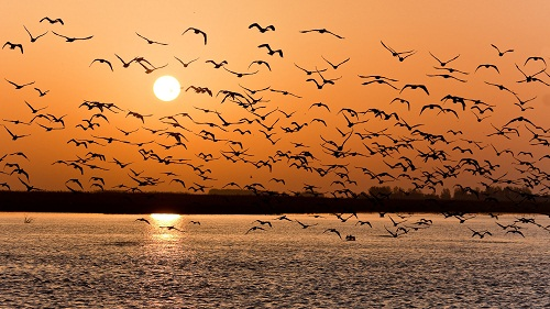 A-flock-of-birds-over-a-lake-at-sunset-wallpaper_7346.jpg