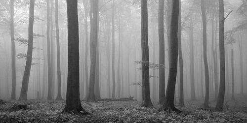 MistForest.jpg