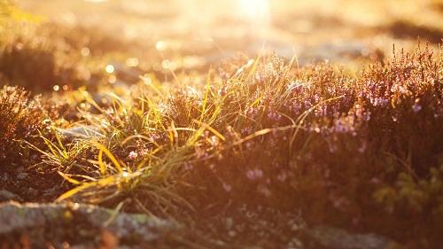 good-morning-dawn-dew.jpg