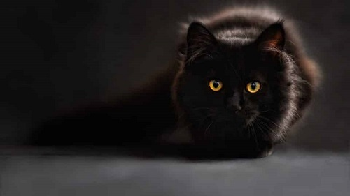 staring-cat-960x540.jpg