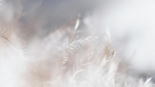 zwfq4zzmr3cokybotzut_white-grass-field-2395253.jpg
