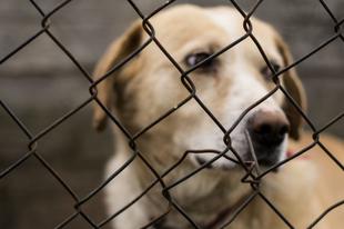 Megfelelően védi a magyar jogrendszer az állatokat?