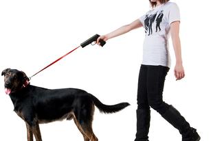Kutyavilág