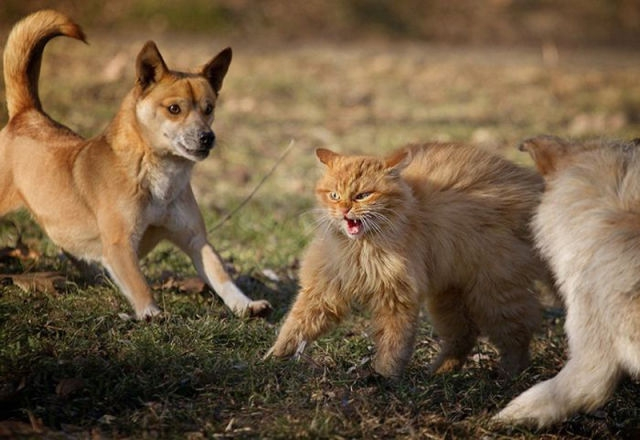 kutya-cica-funnycoolpicturess_blogspot.jpg