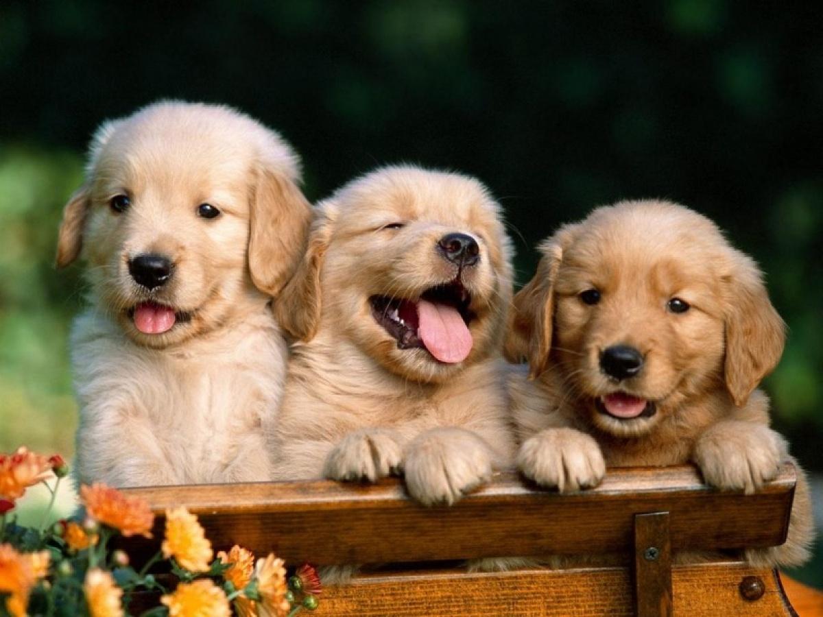 kutyak-retrofm_hu.jpg