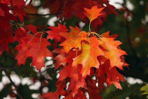 fall-foliage-3705550_340.jpg