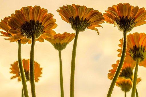 flowers-3705716_340.jpg