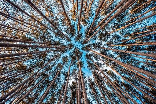 forest-1245951_340.jpg