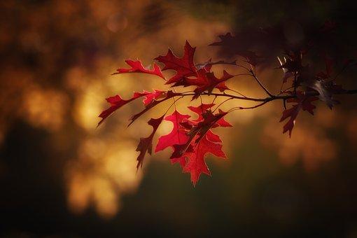 maple-leaves-2895335_340.jpg