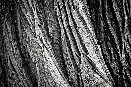 tree-2106115_340.jpg