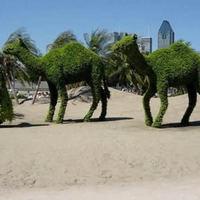 Kreatív kert