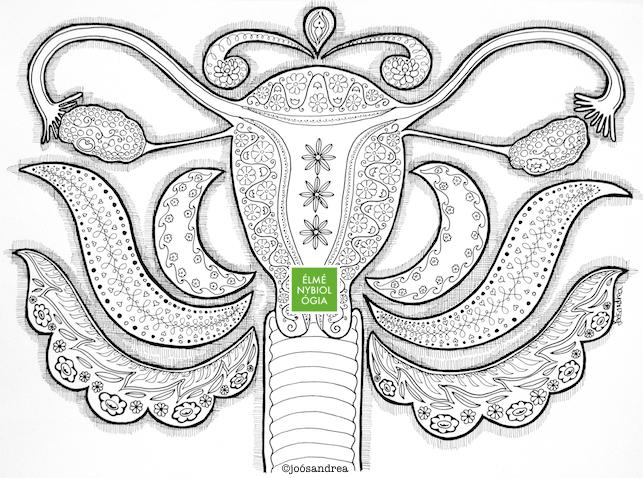 colouring_book_uterus_et_ovari_small.png