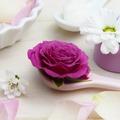 A rózsa illóolaj jótékony hatással van a bőrre, a depresszióra és a hormonokra